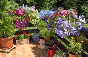 Balkonpflanzen Pflege