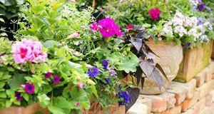balkonpflanzen Pflege Tipps