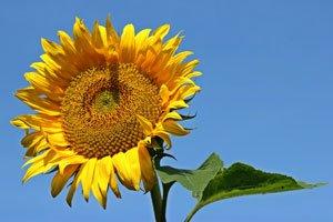 Blütenstiele aufrichten Tipps