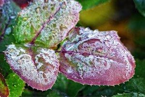 Nach den Eisheiligen können die Blumen raus