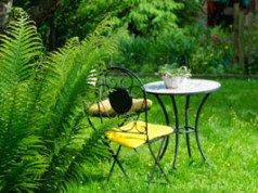 baumfarne pflegen so wird 39 s gemacht. Black Bedroom Furniture Sets. Home Design Ideas