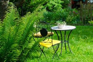 Farn Garten vermehren Anleitung