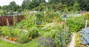 Irrtümer Garten