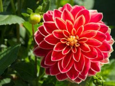 Sommerblume Blüte vorbereiten Tipps