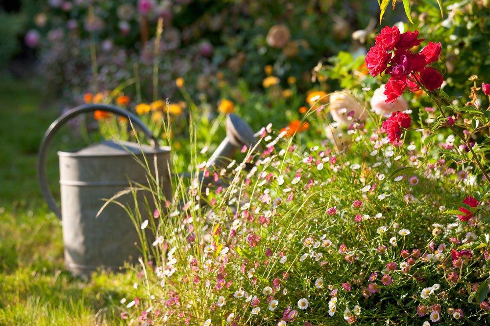 Sommerblumen vorbereiten