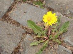 Unkraut jäten Pflanzen schützen