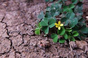 Durch längere Trockenperioden verkrustet der Boden