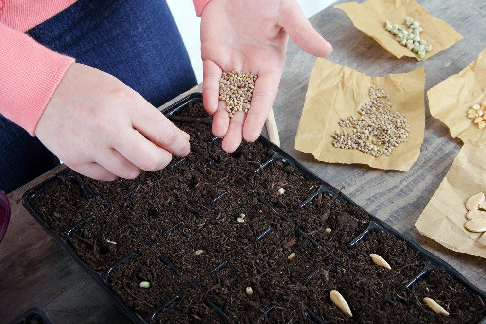 eigene Samen herstellen