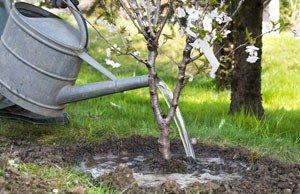 Obstbäume pflanzen - 2 Tipps