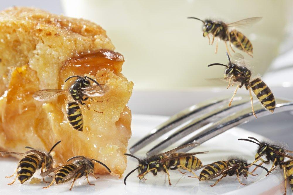 Schutz vor Wespen