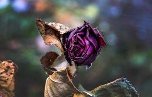 Sommerblumen welk Hilfe Tipps