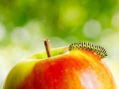 Apfel Made Tipp
