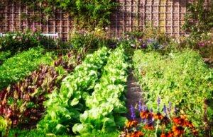 Gemüsebeet Garten
