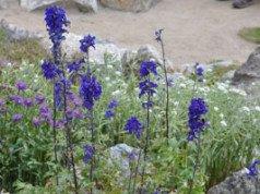Giftpflanzen Garten Hinweise