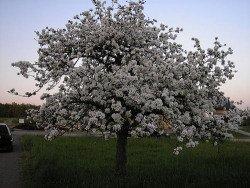 Öbstbäume ausreichend gießen