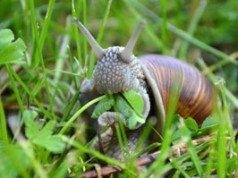 Schnecken Garten vorbeugen Tipps