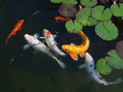 so f ttern sie ihre fische richtig
