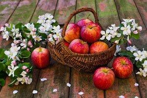 Apfelsorten pflanzen Unterschiede