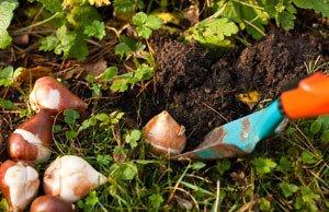 Garten Vorbereitung Herbst Aufgaben