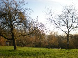 Obstbäume düngen - Daruaf sollten Sie achten!