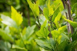 Pflanzen regelmäßig kontrollieren Schädlinge