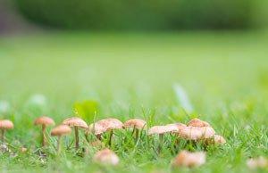 Pilze Rasen entfernen Tipps