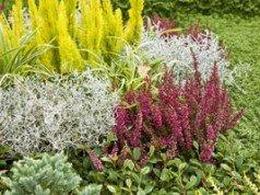 Gartengestaltung im September