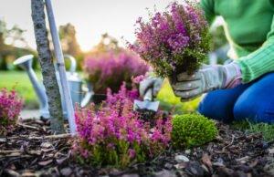 Gartengestaltung September