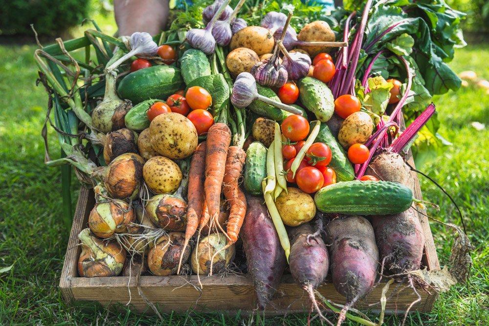 Gemüse einlagern
