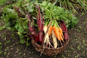 Gemüse ernten im September