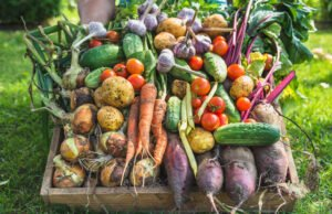 Gemüse ernten September