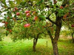 Obstbäume Herbst