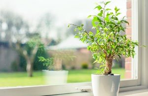 Baum klein halten