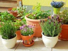 zwergsonnenblumen pflanzen so wird s gemacht. Black Bedroom Furniture Sets. Home Design Ideas