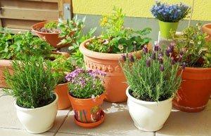 Kübelpflanzen Winter