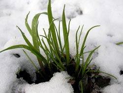 Betreten Sie Ihren Rasen im Winter nicht