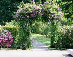 rosenbogen bepflanzen und pflegen so wird s gemacht. Black Bedroom Furniture Sets. Home Design Ideas