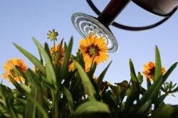 Wasserspeichermatten versorgen Pflanzen sehr gut mit Wasser