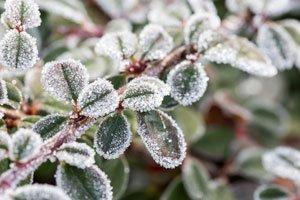 Frostschäden Pflanzen Hilfe