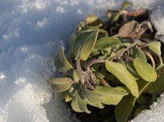 genüse Winter Tipps