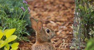 kaninchen Baum Kaninchenfraß Schutz