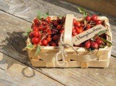 pflaumikose anbau pflege der leckeren mischfruchtsorte. Black Bedroom Furniture Sets. Home Design Ideas