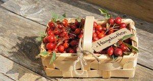 Meine Nüsse November Tipps Für Deinen Garten Garten Im November Tipps Pflege