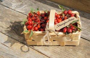 Obst November Garten Tipps