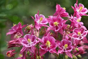 Stauden Pflanzen Tipps