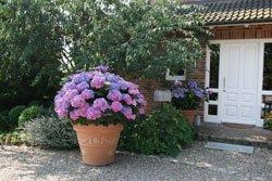 Terrassenpflanzen sollten Sie im Winter gut pflegen