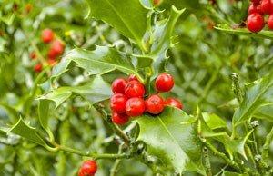 Topfpflanzen winter Winterhart
