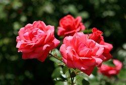 Schützen Sie die Pflanzen mit einem Vliessack