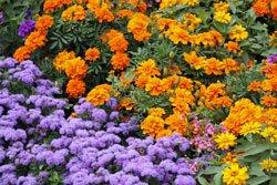 Blumen für jede Jahreszeit - Das Jahreszeitenbeet