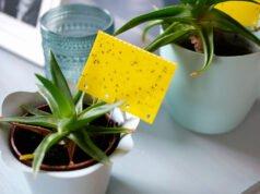 Schädlinge auf einer Gelbtafel